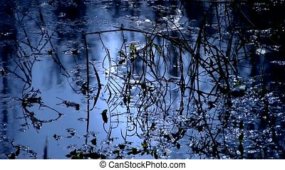Forest and branches reflection in swamps wetlands...