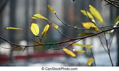 Green shrub leaves in wind,germinate,sprout,bud