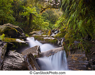 rainforest waterfall - waterfall in a lush new zealand...