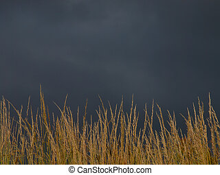 brooding sky over brown grass - A brooding sky is closing...