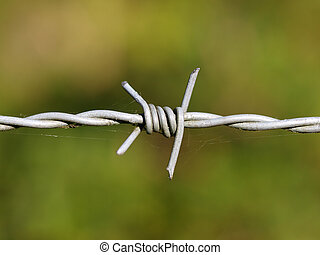detail barbed wire - close up of barbed wire with green...