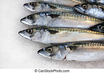 Mackerel on ice for sale at a French fish market