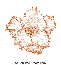 Gladiolus flower - Vector gladiolus flower in vintage...