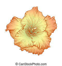 Gladiolus flower - Vector beautiful colored gladiolus flower...