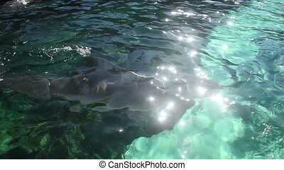 Dolphin cove - Dolphin swimming
