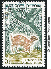 Water chevrotain - IVORY COAST CIRCA 1964: stamp printed by...