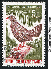 Stone partridge - IVORY COAST CIRCA 1966: stamp printed by...