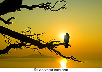 bird on branch on sunset - Rock kestrel bird of prey perched...