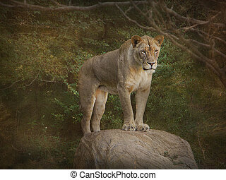 lioness on a rock - Lioness posing on a rock with textured...