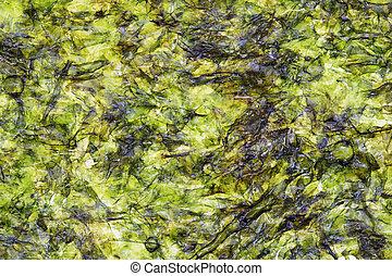 nori seaweed sheet - macro image of nori pressed seaweed...
