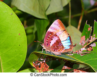 Rainforest Butterfly in Queensland - Bright Butterfly in the...