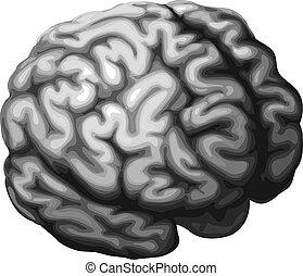 Brain illustration - Illustration of a monochrome brain in...