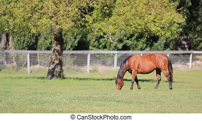 Horse Graze MS - A horse grazes in a green pasture under a...
