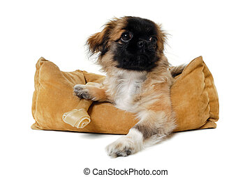 Puppy in dog bed - Puppy dog in dog bed Taken on a white...