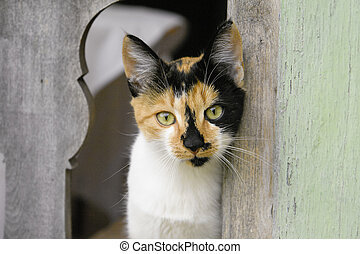 Calico Cat Staring Through Fence - Calico cat with green...