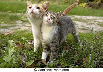 Kitten Friends - Two kittens leaning on eachother together...