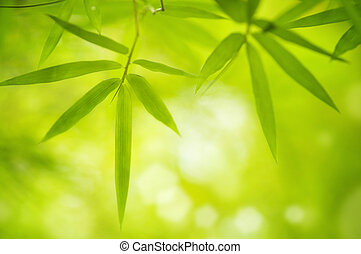 Bamboo leaves - Close up bamboo leaves with copy space