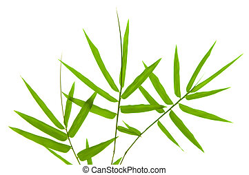 Bamboo leaves on white background