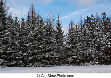 Winter view with trees