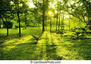 verde, árboles, parque