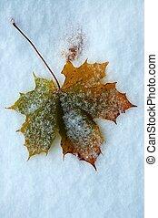 Autumn leaf on snow