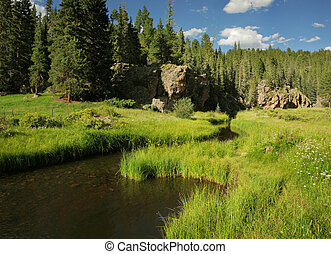 Beautiful lush meadow and forest with stream
