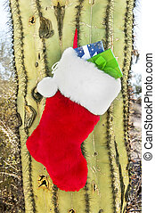 Christmas stocking on cactus - A Christmas holiday stocking...