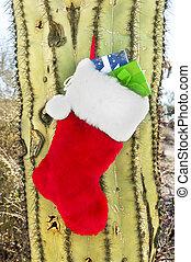 Christmas stocking on cactus - A Christmas holiday stocking...