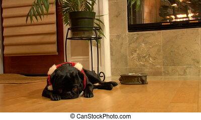 Christmas Pug zolly