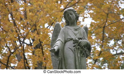 Cemetery angel. - A statue of an angel looks down. Yellow...