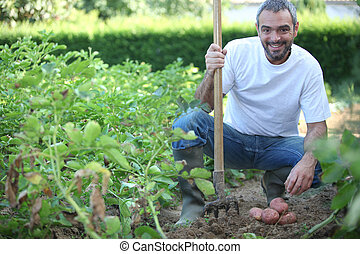 40 years old man harvesting potatoes with his fork