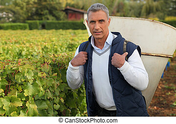 mature grape-picker carrying hod on his back