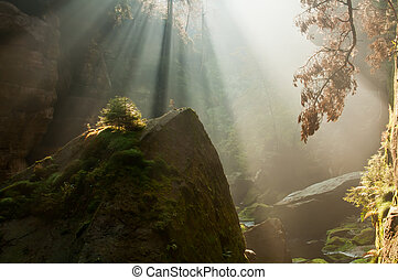 Autumn Sunbeams - View of beautiful sunbeams during the...