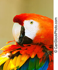 Parrot - Beautiful exotic parrot in zoo Red Macaw Ara...