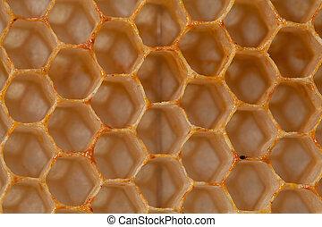 Waben - Bienenwabe - Nahaufnahme - Aufnahme von Honigwaben...