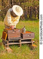 Imker bei der Arbeit - ein Imker berprft die Honigproduktion...