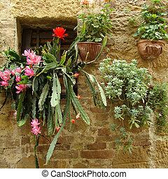 succulent plants in window