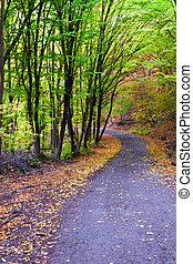 Autumn forest, winding road, bridge