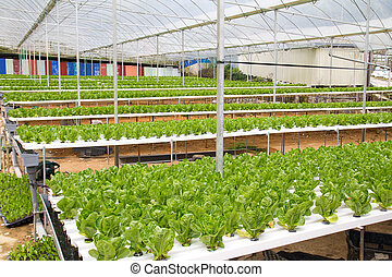 Hydroponic green house - Organic hydroponic vegetable garden...