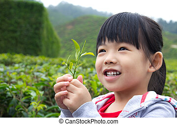 Little child at tea plantation - Young child holding a tea...
