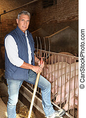 Farmer in a pig pen