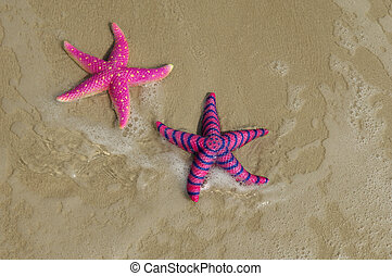 two colorful seastars sitting on beach