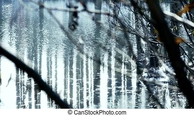 Forest and branches reflection in s