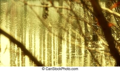 Forest and branches reflection