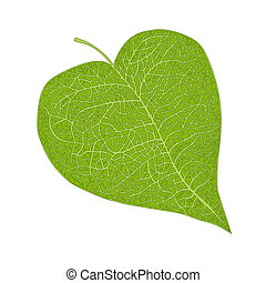 heart shaped leaf isolated on white
