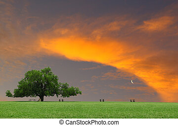 A large oak tree in a grass field in a park used as a shade tree for picnic tables on a gorgeous summer day as the sunsets through the clouds with room for your text.