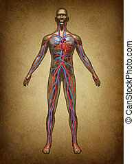 Human Blood Circulation Grunge - Human blood circulation...