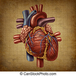 Human Heart Old Grunge Medical Document - Human heart in an...