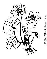 field flower silhouette on white background