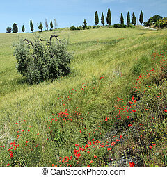 tuscan countryside in spring